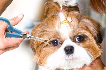 3-ех дневный курс стрижки собак для начинающих (23 часа)
